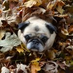 How to Winterize Your Lawn and Garden in Fall