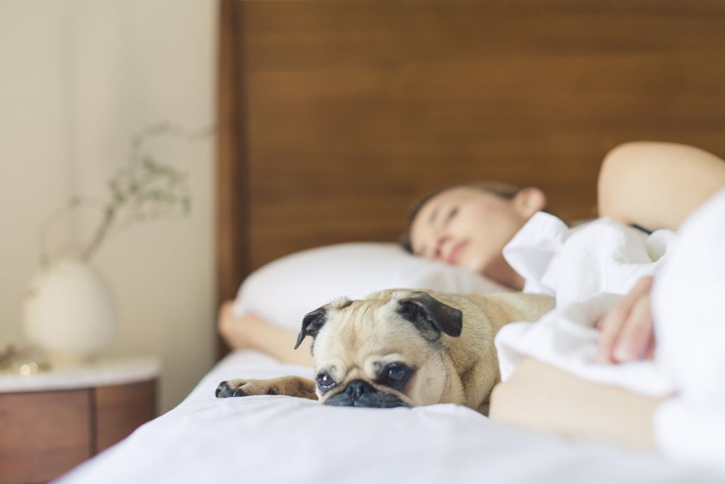 Better Sleep Habits Sleeping Dog London Drugs Blog