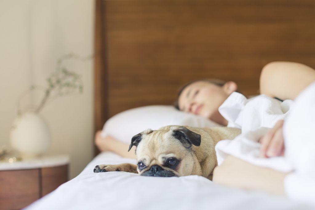 Understanding snoring and sleep apnea