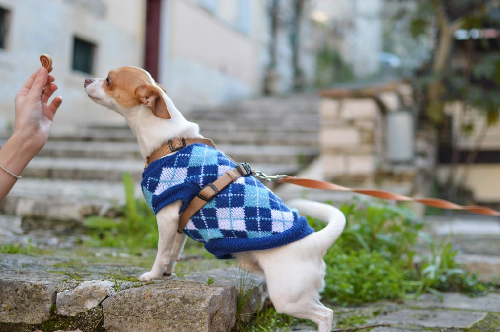Pet Products Your Fuzzy Friends Will Love